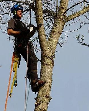 Demontage d'arbres Pau - Lacq - Orthez - Serres Castet - Jurançon