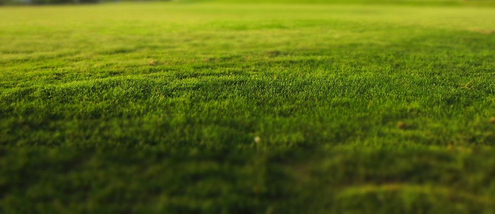 Entretien des espaces verts à Pau, Entretien des espaces verts à Lons, Entretien des espaces verts à Lescar, Entretien des espaces verts à Billère, Entretien des espaces verts à Idron, Entretien des espaces verts à Soumoulou, Entretien des espaces verts à Serres Castet, Entretien des espaces verts à Sauvagnon, Entretien des espaces verts à Denguin, Entretien des espaces verts à Lacq, Entretien des espaces verts à Orthez, Entretien des espaces verts à Mont, Entretien des espaces verts à Mourenx, Entretien des espaces verts à pau, Entretien des espaces verts à Artix, Entretien des espaces verts à Gan, Entretien des espaces verts à Poey de Lescar, Entretien des espaces verts à Lée, espaces verts pau, espace vert pau, espaces verts Pau, espace verts pau, espaces verts orthez, espaces verts lescar, espaces verts billere, espaces verts sauvagnon, espaces verts serres castet