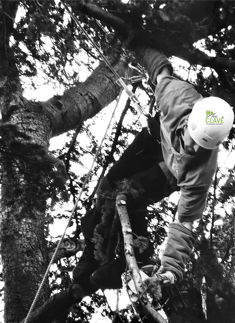 Taille d'arbre Pau