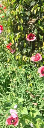 Sunday blooms, Delhi, India