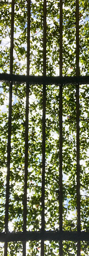 Grassy canopy, downtown San Francisco, USA