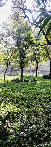 Neighborhood park, Delhi, India