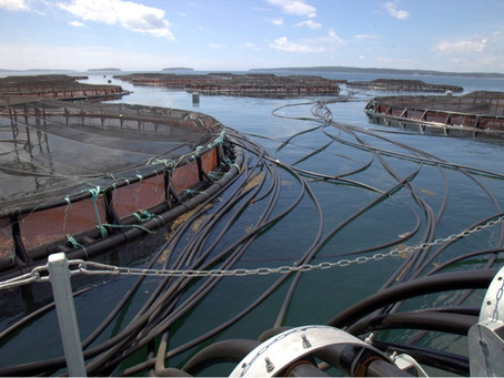 Over 300 Tonnes of Microplastics From Norwegian Salmon Farms Annually.