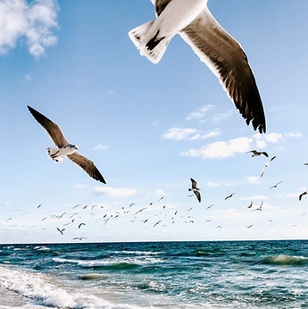 "YOGA & OCEAN ""Transition automnale"" Belle Ile en Mer: 22 - 26 sept 21"