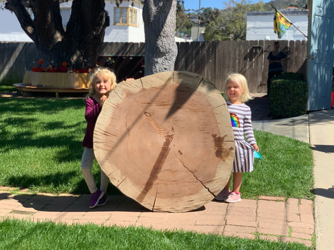 Tree week