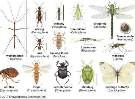 Insects Week