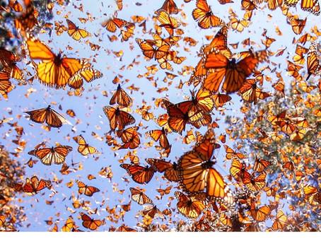 Butterfly Week