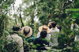 Observación de gorilas en Uganda