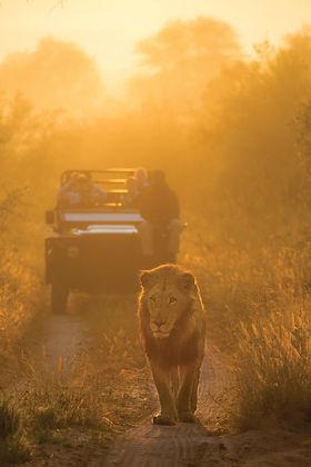 Safari en Kruger