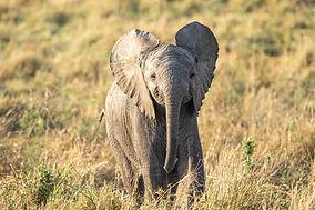 Safaris a medida en África