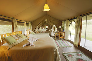 Porini Lion Camp, Kenya