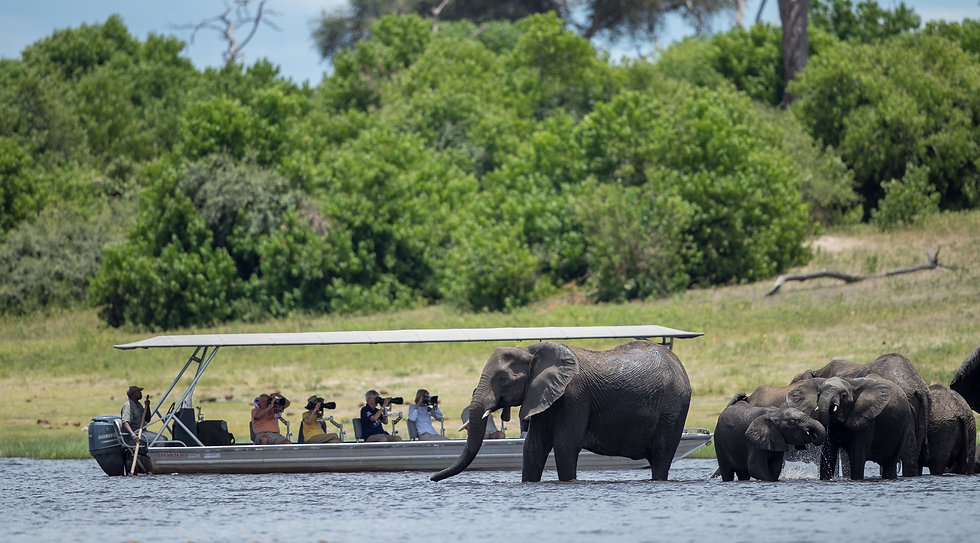Safari para fotógrafos, África