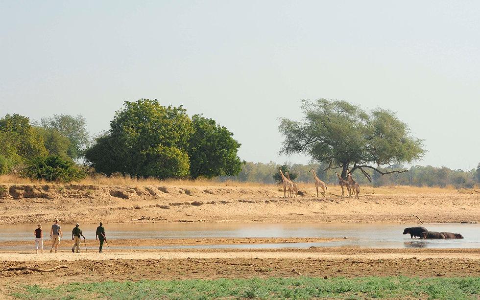 Safari a pie en Zambia