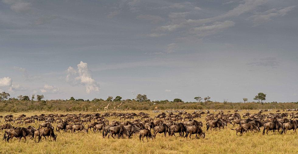 Gran Migración, Kenya