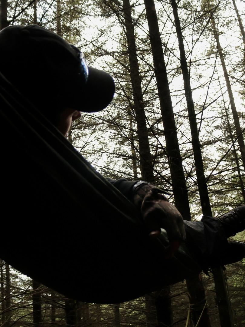 Hammock in Forest