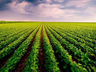 Vitória para o agro: produtor rural registrado há menos de 2 anos na Junta pode requerer recuperação