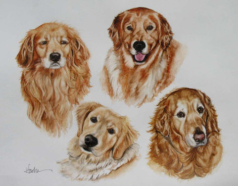 McHugh Dogs