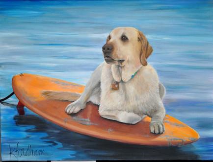 Marley on surfboard.jpg