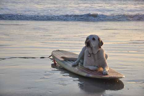 Marley w board - COASTAL LIVING.jpg