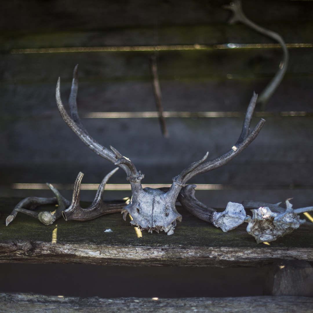 Deer bones.