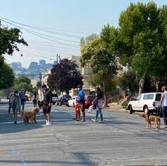 walkers two dogs.jpg