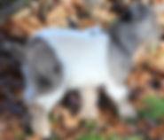Petaloosa buckling moonspotted.jpg