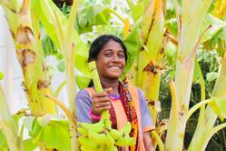 APCF - India girl harvesting bananna