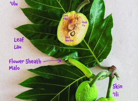 Meet the Plants - Breadfruit ('Ulu)