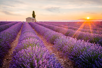 Provence, Lavender field at sunset, Vale