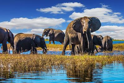 Botswana Chobe National Park, the river