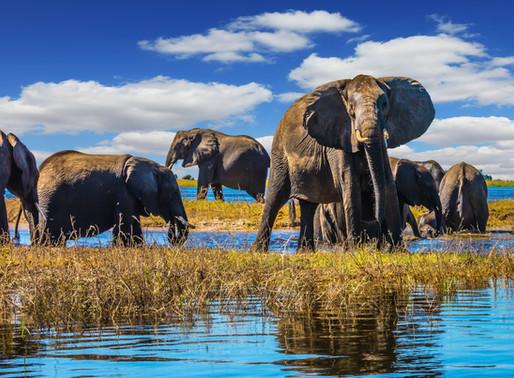 Botswana & Zimbabwe, here I come