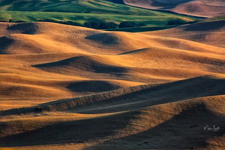 Wheat field shadows.jpg