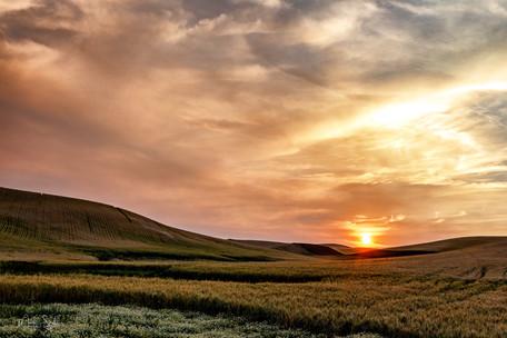 Paloue sunset over wheat field A crop.jp