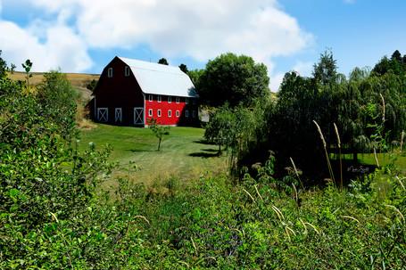 Colfax red barn setting.jpg