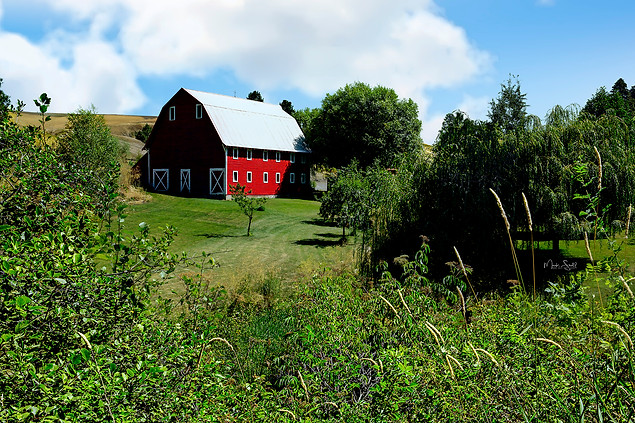 Colfax red barn setting.jpg