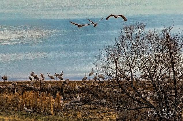 Sandhill Hiwassee migration