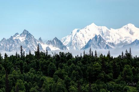 Denali Mtn range forest