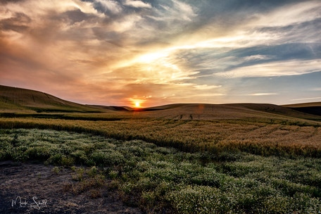 Paloue sunset over wheat field A.jpg