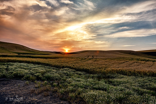 Paloue sunset over wheat field A.jpg