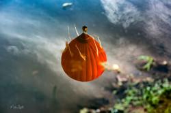 balloon pond reflection