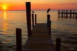 Destin dock w birds soft color post