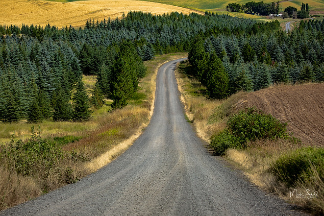 back gravel road Palouse.jpg
