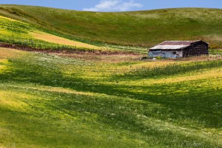 Palouse field shed.jpg