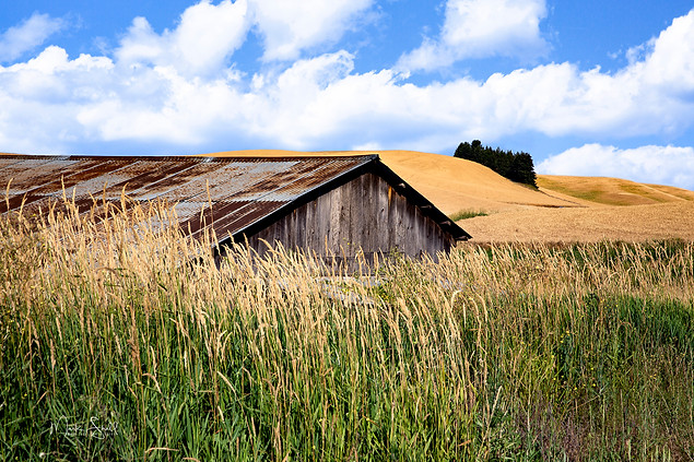 Palouse low shed roof.jpg