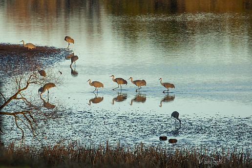 birds crane stroll walk post.jpg