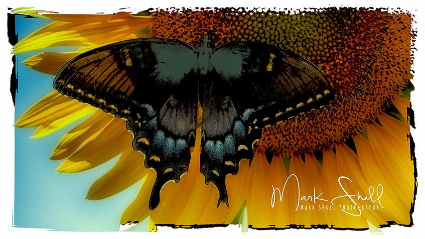 Sunflower Butterfly Art post.jpg