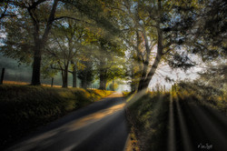 Cades Cove road entrance sunburst