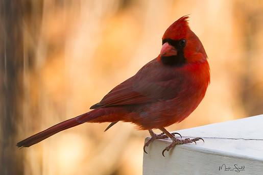 Cardinal rail head turn