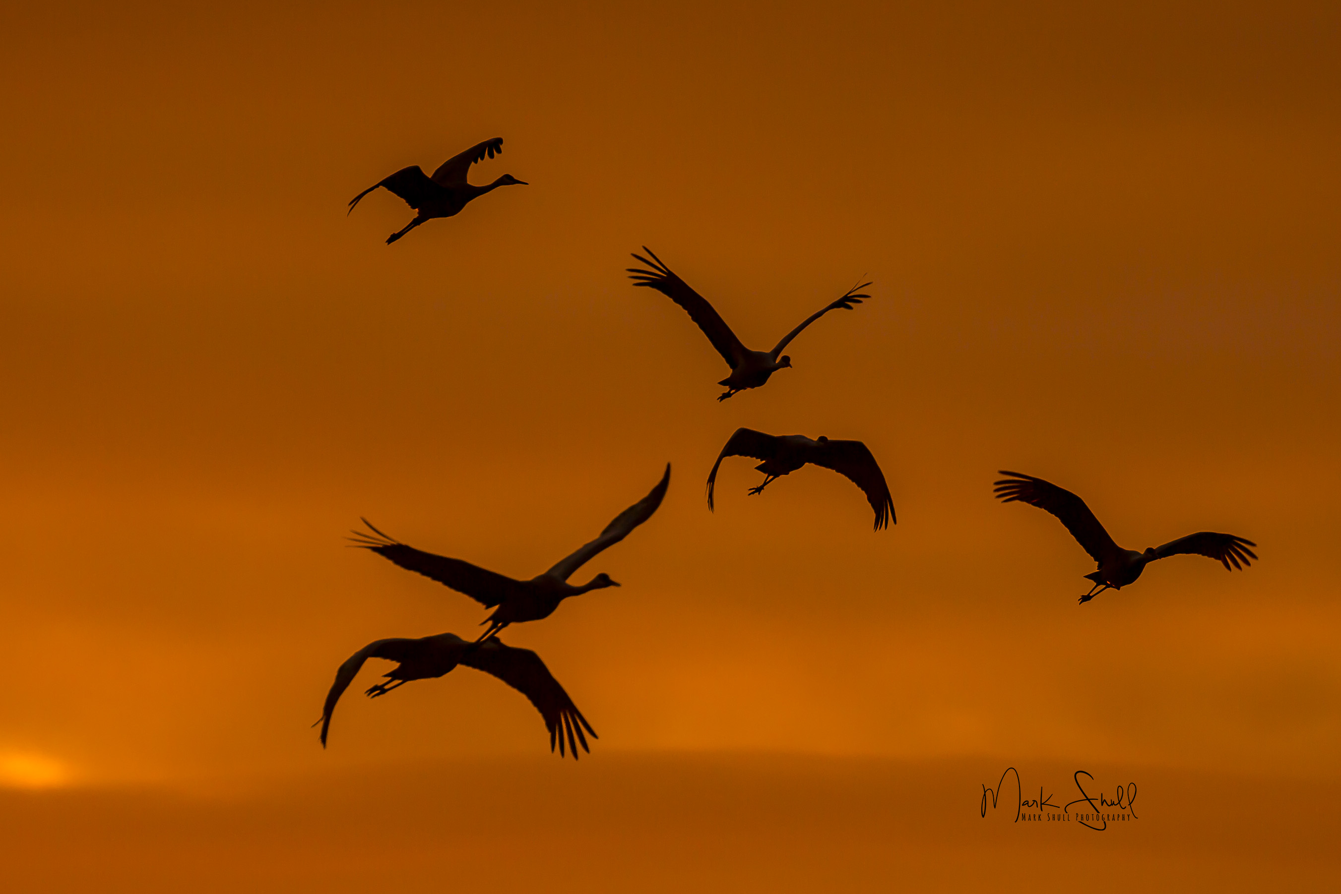 birds sandhill cranes orange silhouette 010517