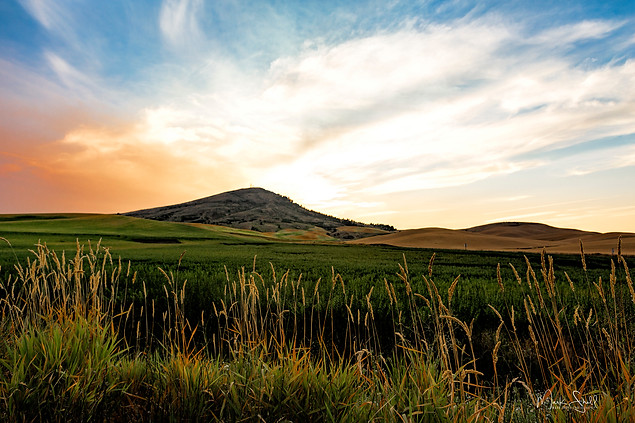 Palouse summer sunset Steptoe Butte.jpg